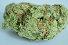 Critical Kush (SPECIAL pound)